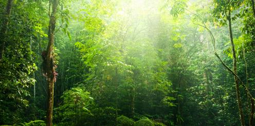 Stipendiendschungel: Die Suche nach der passenden Förderung