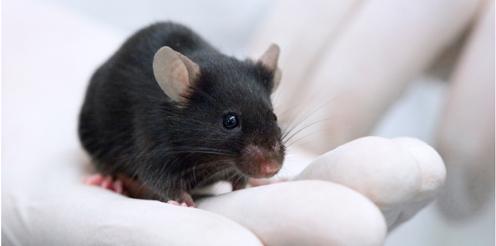 Studieren ohne Tierversuche – Projekt SATIS zeigt Wege