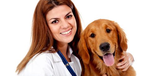 Tierheilpraktiker werden im Fernstudium